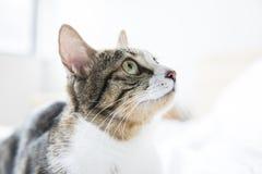 Eine reizende Katze auf Bett lizenzfreies stockbild
