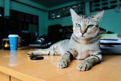 Eine reizende verärgerte Katze auf dem Schreibtisch stockbild