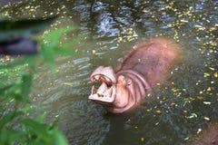 Eine reizende Zeit im Zoo Lizenzfreies Stockbild