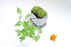 Eine Ringelblume mit einem Kaktus in einem Topf Stockfoto
