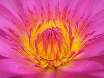 Eine rosafarbene Dame lizenzfreie stockfotografie