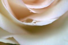 Eine rosafarbene rosafarbene Nahaufnahme Lizenzfreies Stockbild