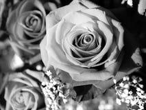 Eine Rose durch irgendeine andere Farbe? Stockbilder