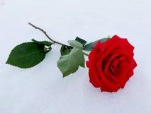 Eine Rose für jeder Stockbild