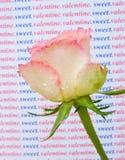 Eine Rose für meinen süßen Valentinsgruß. Lizenzfreies Stockbild