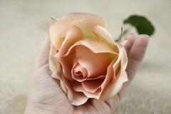 Eine Rose und eine Hand Stockfotos