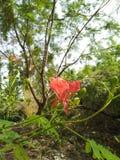 Eine rote Blume auf Ecke auf Niederlassung, grünen Knospen und Blättern, Hintergrund lizenzfreies stockfoto