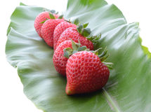 Eine rote Erdbeere Stockfoto