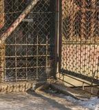 Eine rote Katze der getigerten Katze, die hinter einem Zaun sitzt; Polen Lizenzfreie Stockfotografie