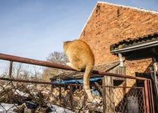 Eine rote Katze, die auf einem Geländer sitzt; Polen Stockfoto