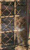Eine rote Katze hinter einem Zaun; Polen Stockbilder