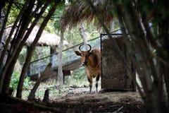Eine rote Kuh auf dem Gebiet lizenzfreie stockbilder