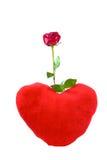 Eine rote Rose und ein Innerkissen. Lizenzfreie Stockfotos