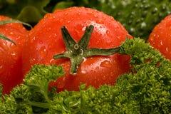 Eine rote Tomate auf dem frischen Grün Lizenzfreies Stockfoto