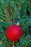 Eine rote Weihnachtsdekoration auf Baum Stockfotos
