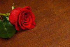 Eine Rotrose auf einem dunklen Hintergrund Lizenzfreie Stockbilder