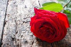 Eine Rotrosennahaufnahme auf hölzernem Hintergrund mit Wassertröpfchen Lizenzfreies Stockfoto