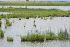 Eine ruhige Landschaft eines grasartigen Seeufers an einem bewölkten Tag Stockfoto