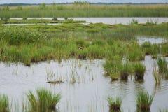 Eine ruhige Landschaft eines grasartigen Seeufers an einem bewölkten Tag Lizenzfreies Stockfoto