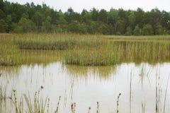 Eine ruhige Landschaft eines grasartigen Seeufers an einem bewölkten Tag Stockfotos