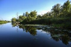 Eine ruhige Wasserlandschaft, Anlagen reflektierte sich in der Wasseroberfläche Stockfoto