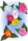 Eine Sammlung Begonienblume Vektor-Illustrationen Stockfotos