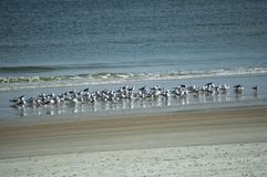 Eine Sammlung Vögel im Strand a Stockfotografie