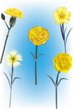 Eine Sammlung von fünf gelben Gartennelken-Vektoren Lizenzfreie Stockfotografie