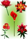 Eine Sammlung von roter Lily Vector Illustrations Lizenzfreies Stockbild