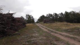 Eine Sandstraße auf der bewaldeten Düne auf Curonian-Spucken stock footage