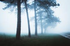 Eine schön schwermütige nebelige Allee von Bäumen im Cotswolds stockfoto