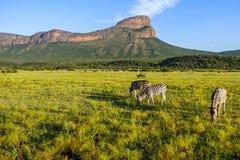 Eine schöne Ansicht in Südafrika mit Zebras und einem Berg lizenzfreies stockfoto