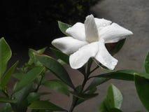 Eine schöne Blume Stockbild