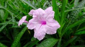 Eine schöne Blume ist sehr herrlich lizenzfreies stockfoto