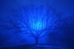 Eine schöne Eiche im blauen Abendnebel Lizenzfreies Stockbild