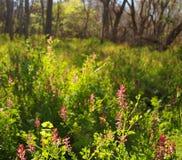 Frühlings-Wiesen-Hintergrund Stockbilder