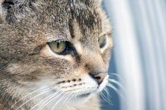 Eine schöne Katze Lizenzfreie Stockfotos