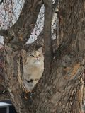 Eine schöne Katze sitzt auf dem Stamm eines wilden Apfelbaums Stockfotografie