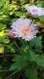 Eine schöne klassische Blume stockfotografie