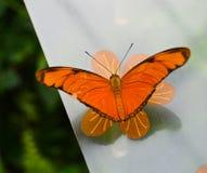 Eine schöne orange Basisrecheneinheit Stockbilder