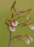 Eine schöne Orchidee stockbild