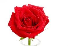 Eine schöne Rotrose gehalten im Vase Stockfoto