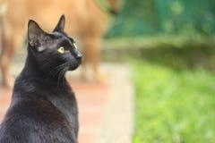 Eine schöne schwarze Katze mit gelben Augen Stockfotografie
