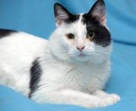 Eine schöne Schwarzweiss-Katze Stockbild