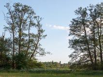 Eine schöne Szene im Land mit einem Abstand zwischen dem Bäume ou Stockbild