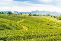 Eine schöne Teeplantage Lizenzfreies Stockbild