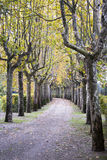 Eine schöne tree-lined Allee lizenzfreies stockbild