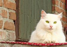 Eine schöne weiße Katze, die auf dem Portal sitzt Stockfotografie