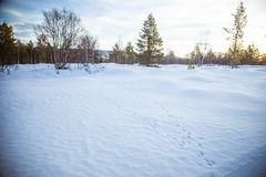 Eine schöne weiße Landschaft eines Tages des verschneiten Winters mit Abdrücken Lizenzfreies Stockbild