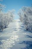 Eine schöne weiße Landschaft eines Tages des verschneiten Winters mit Abdrücken Stockfotografie